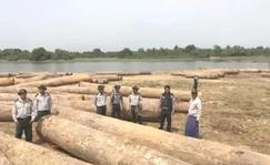 实皆省林业局半年内共计查获违法木材5000余吨