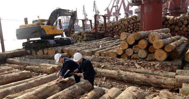 疫情下,木材进口企业如何前行
