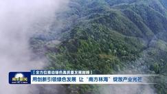 专家献策助力福建南平打造千亿产值林产工业