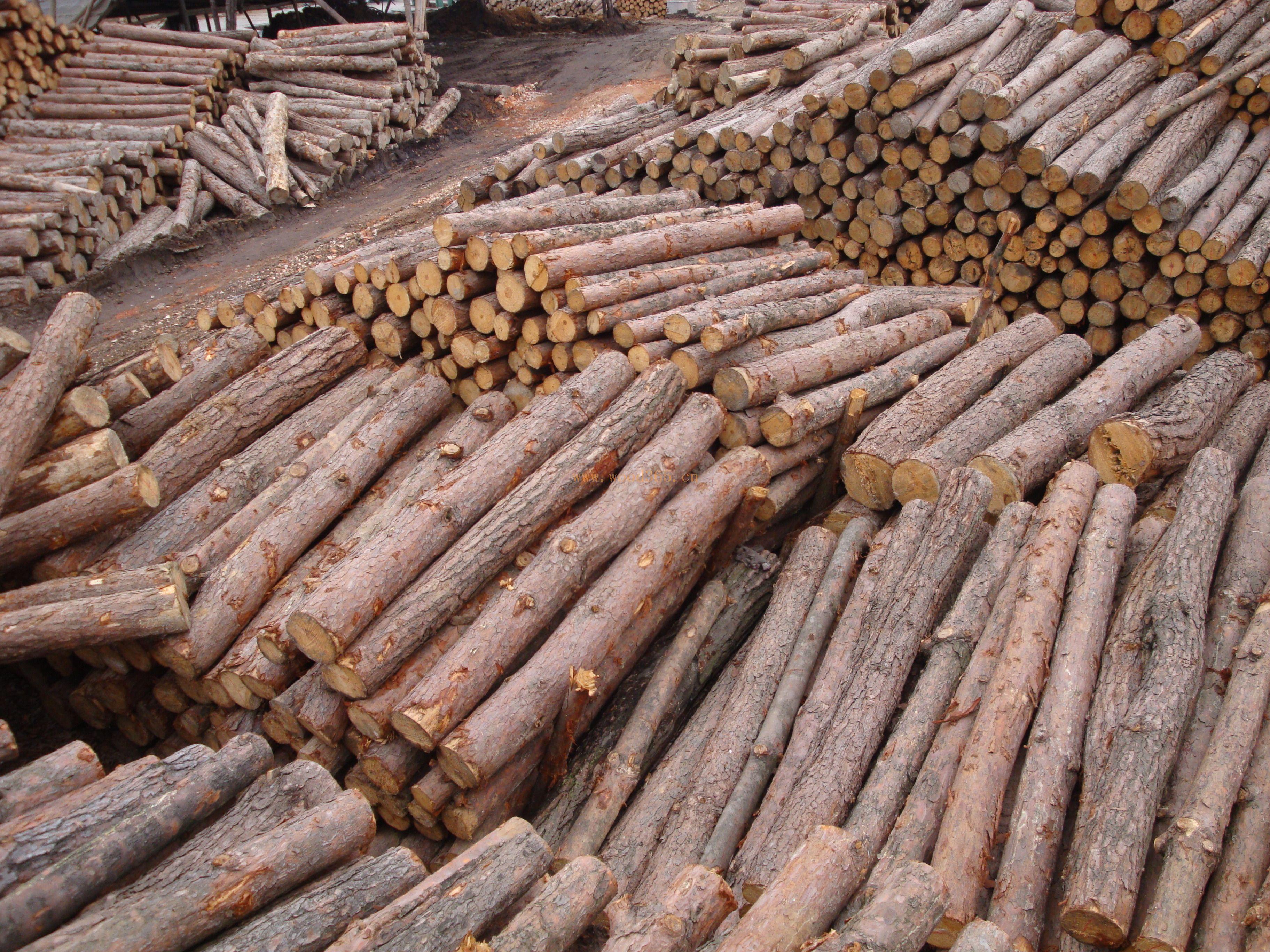 矿用撑木小松原木