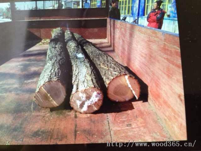 大量出售柞木