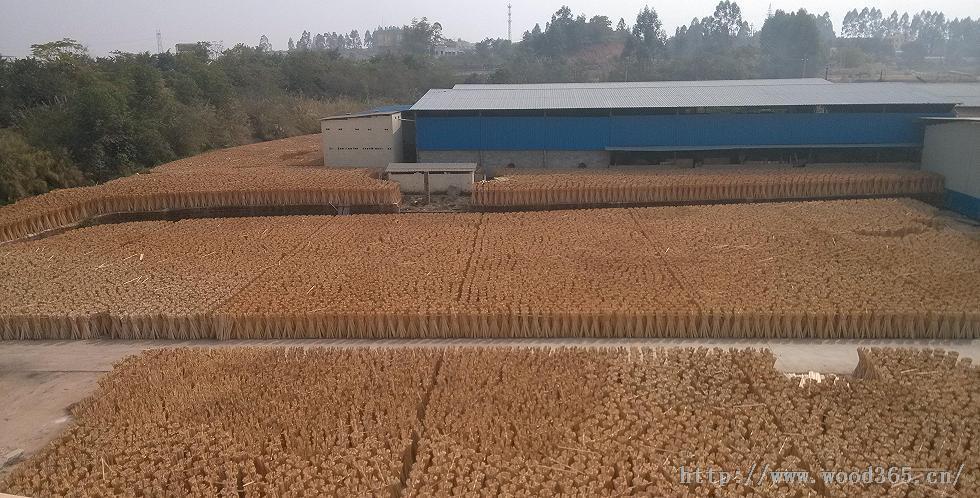 桉木板材**生产基地、全国细木工板生产基地