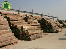 供应正宗缅甸柚木原木板材 别墅装修 高档实木家具