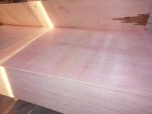 杨木多层胶合板