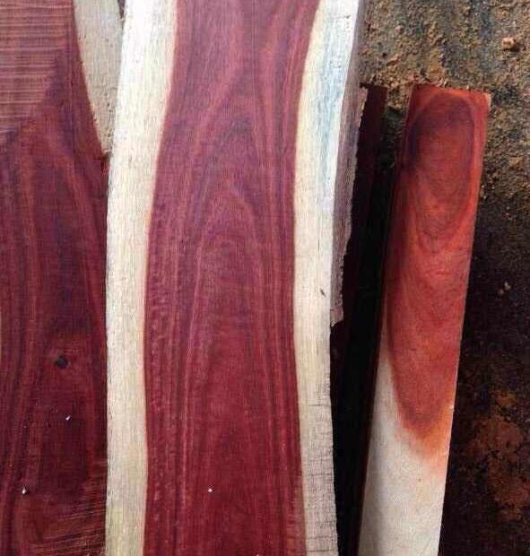 木材百科:热带非洲珍贵树种染料紫檀(血檀)